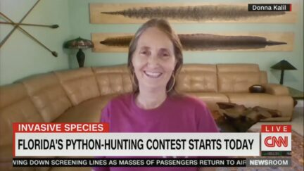 donna kalil florida python hunt
